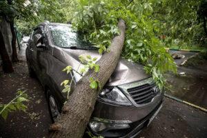 Как защитить интересы автовладельца в результате падения на машину дерево